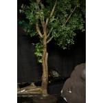 Tree Medium