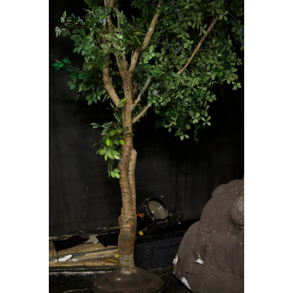 Tree, Medium